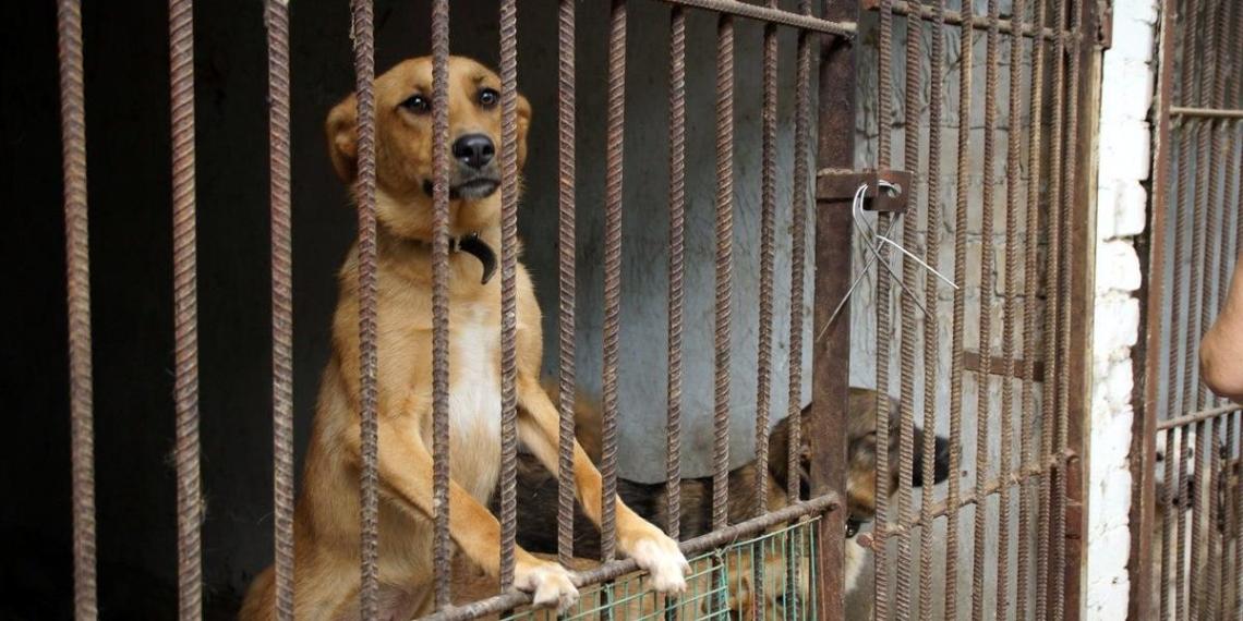 В приюте под Тверью ради прибыли усыпили более 200 здоровых собак