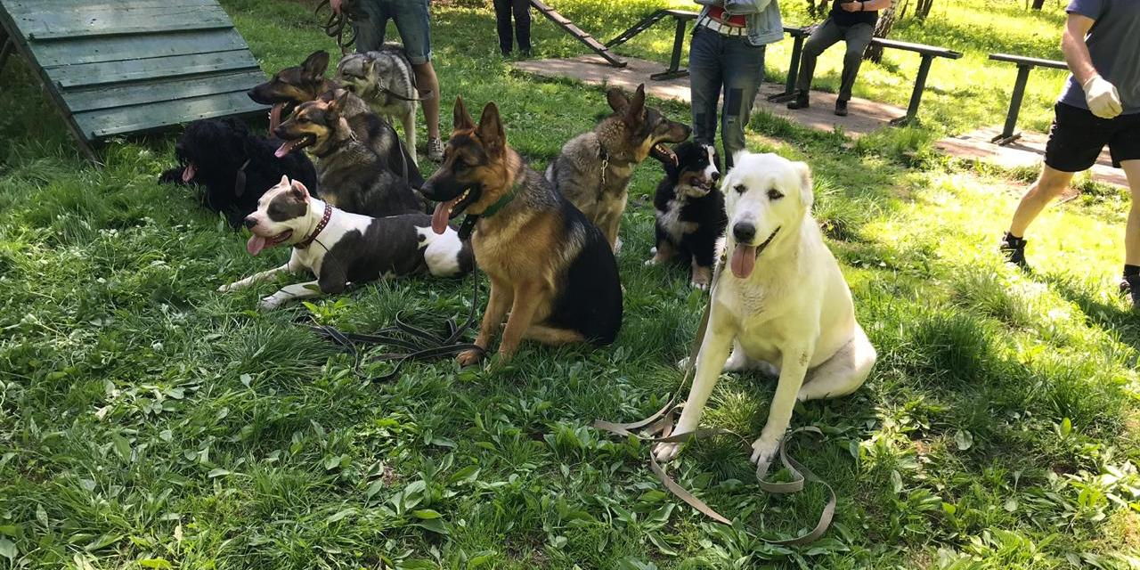Россиян ожидает обязательная регистрация собак