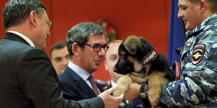 Французы признали подаренную Россией собаку Добрыню непригодной к службе