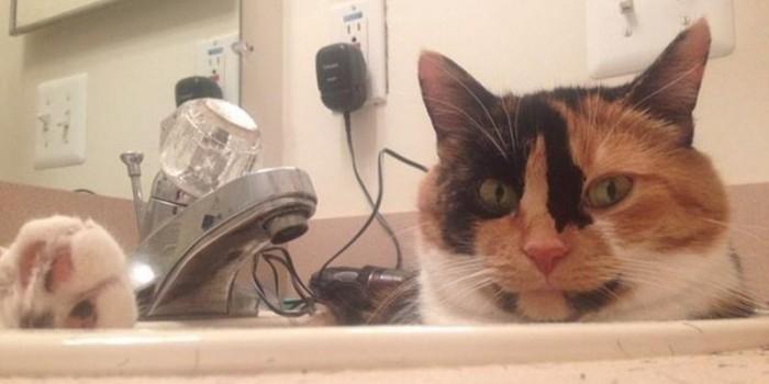 20 котов, в которых можно узнать себя на работе