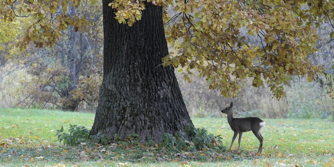 Совфед одобрил закон, разрешающий охотиться в российских лесах, расположенных в зеленых зонах
