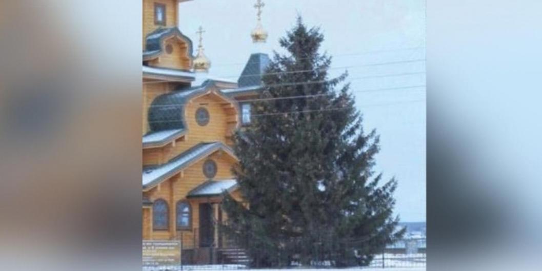 Власти Первомайска опровергли кражу елки у местной жительницы
