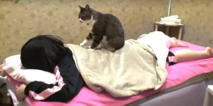 В Японии кошка работает массажистом в спа-салоне