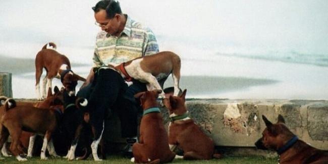 Тайцу грозит 37 лет тюрьмы за оскорбление собаки короля