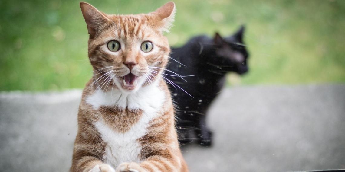 Украинка не захотела спасать кота из-за русскоговорящего полицейского