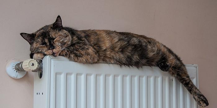 В половине домов в Москве включили отопление