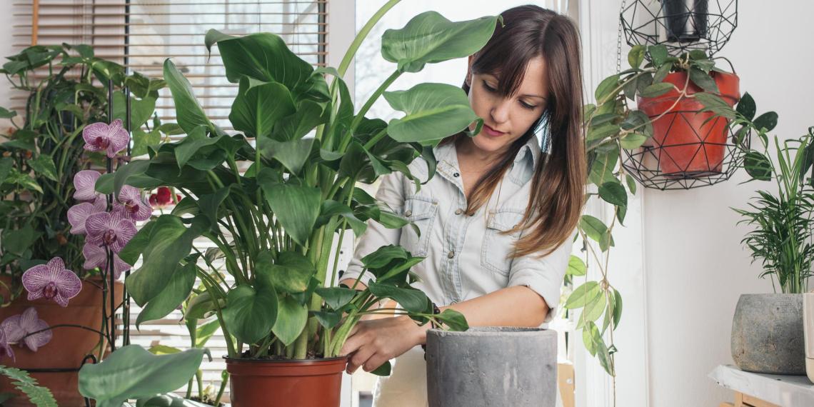 Малышева назвала опасные для человека комнатные растения